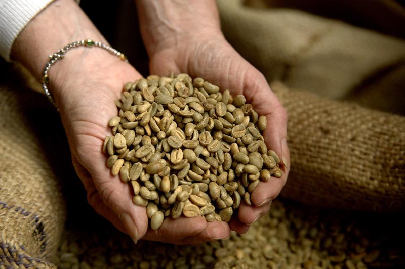 Frische Kaffeebohnen in einer Schale aus zwei Händen